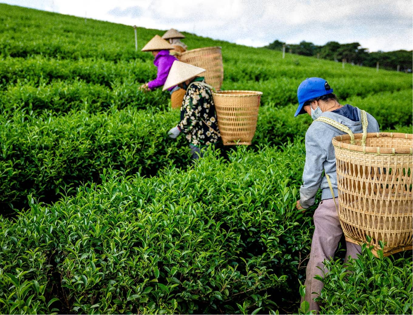 Orange branding Teatone Tea Retail Design Brand Essence